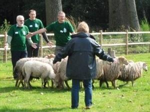 r0-29-300-225-554-4-sint-jozefhoeve-schapen